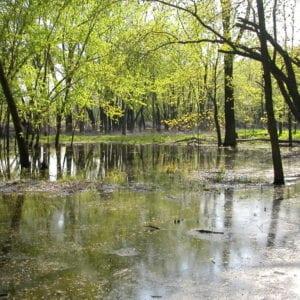 wetlands-Ephemeral-Ponds-2