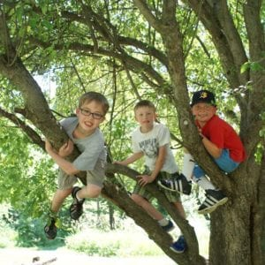 ICNC-boys-in-a-tree-smaller