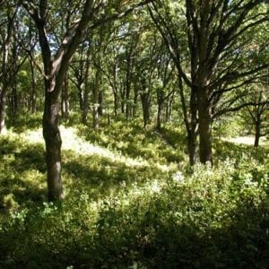 oak-savanna-small