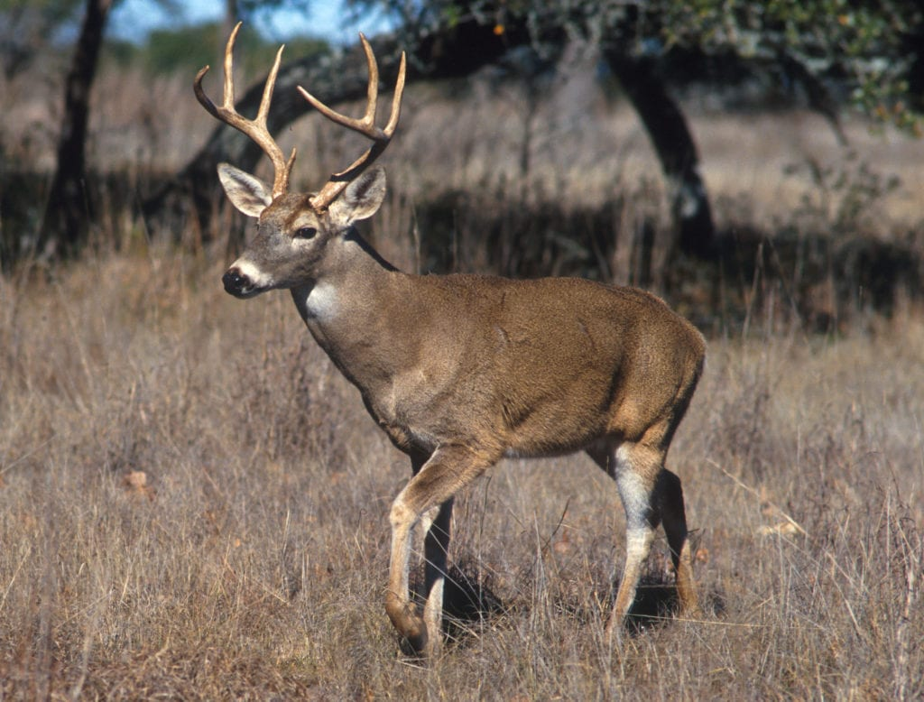 2018-2019 non-resident deer tag auction set for June 22